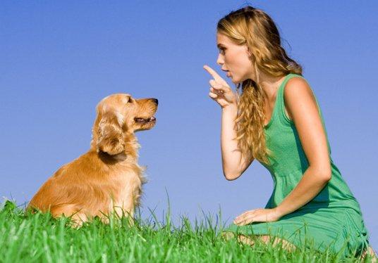 Три важных совета по дрессировке щенка