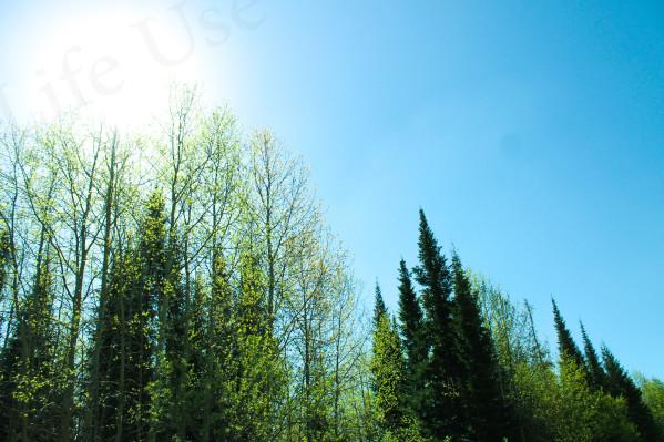 Свежий воздух и почему полезно бывать в лесу