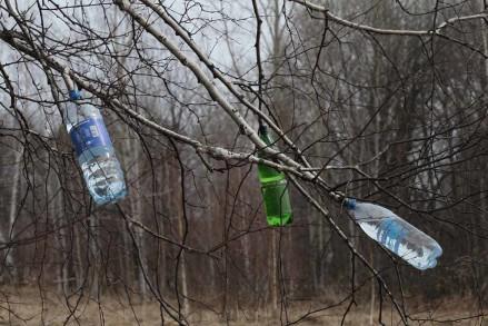 Березовый сок. Польза и вред