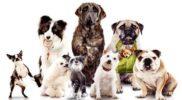 Какие породы собак самые умные в мире?