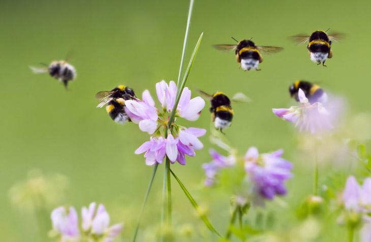 Как пчелы добывают мед. Сбор пыльцы
