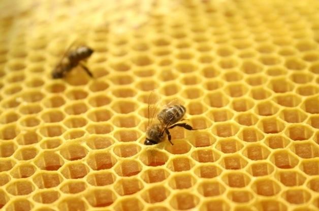 Как пчелы добывают мед.  Ячейки